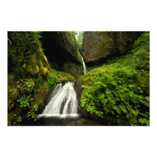 Waterfall in a Forest of the Pacific Northwest Photograph