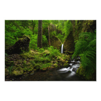 Waterfall in a Forest of the Pacific Northwest Photographic Print