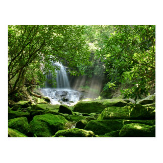 Waterfall in Rain Forest Postcard