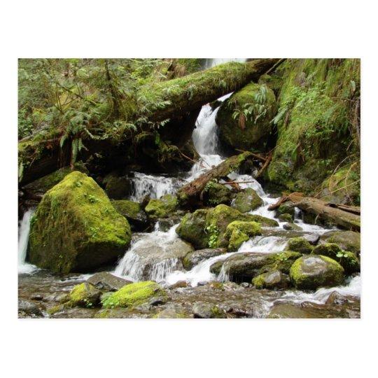 Waterfall on South Shore Road at Lake Quinault Postcard