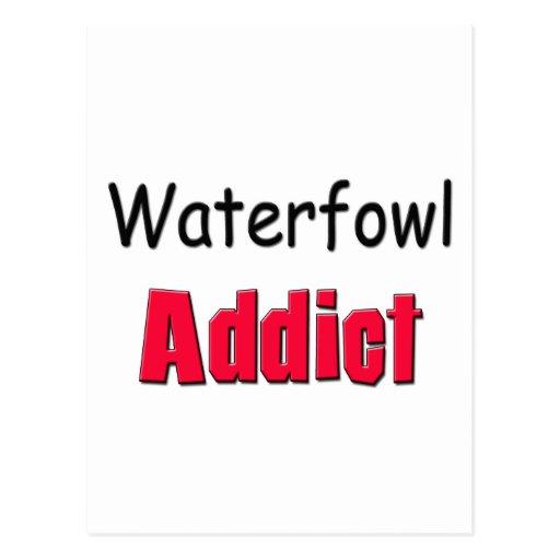 Waterfowl Addict Postcards