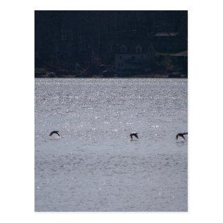 Waterfowl In Flight Postcard