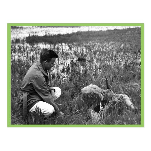Waterfowl Survey Post Card