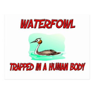 Waterfowl trapped in a human body post card