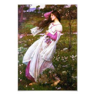 Waterhouse Windflowers Print Photo
