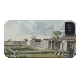 Watering tea plants (w/c on paper) iPhone 4 case