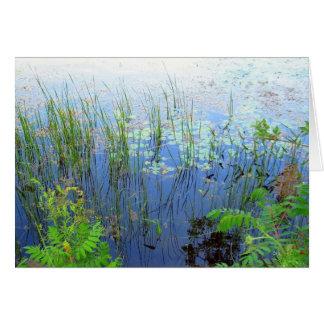 Waterlilies, Sharon CT Card