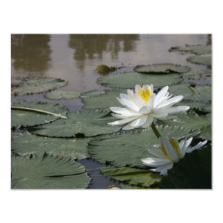 Waterlilly 11 Cm X 14 Cm Invitation Card