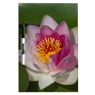 waterlily in the lake dry erase board