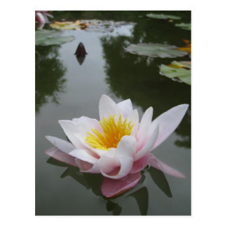 Waterlily postcard