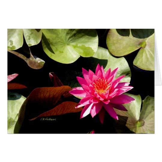 Waterlily Rose I Card