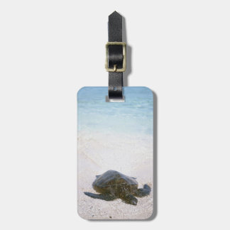 Water's edge luggage tag