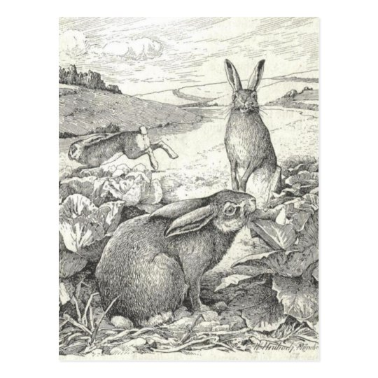 Watership Down Postcard