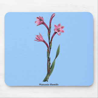 Watsonia Humilis Mouse Pad
