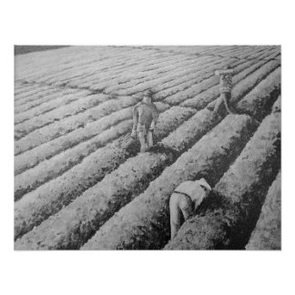 Watsonville Migrant Mexican Workers Print