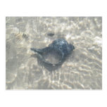 Wave-Washed Black Conch Seashell Postcard