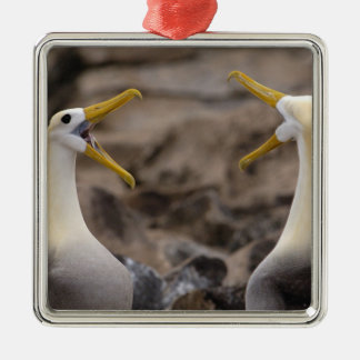 Waved albatross Phoebastria irrorata) pair in Silver-Colored Square Decoration