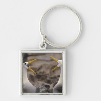 Waved albatross Phoebastria irrorata) pair in Silver-Colored Square Key Ring