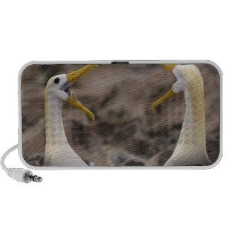 Waved albatross Phoebastria irrorata) pair in iPod Speakers