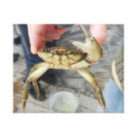 Waving Crab Canvas Prints
