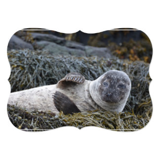 Waving Seal 13 Cm X 18 Cm Invitation Card