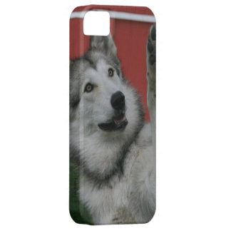 Waving Wolf iPhone 5 Case