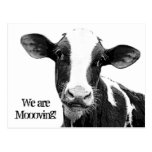 We are Moving! Moooving Change of Address Cow Postcard
