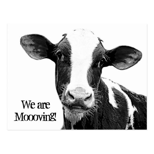 We are Moving! Moooving Change of Address Cow Post Cards