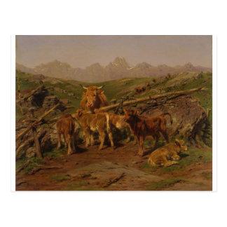 Weaning the Calves by Rosa Bonheur Postcard