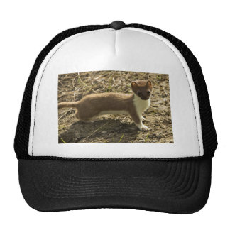 Weasel, Short-tailed Hats