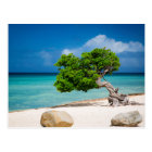 Weathered Fofoti tree Postcard
