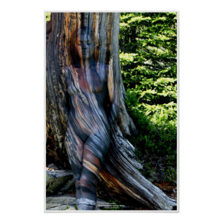 Weathered Swiss Pine by Johannes Stötter Poster