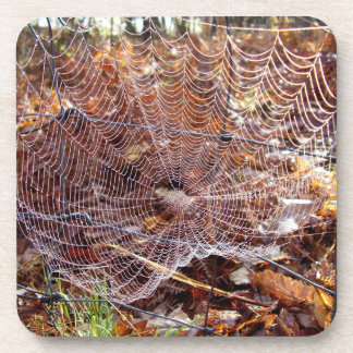 Web of European Garden Spider Hard Plastic Coaster