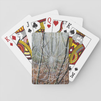 Web of European Garden Spider Playing Cards