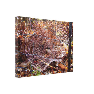 Web of European Garden Spider Wrapped Canvas Print