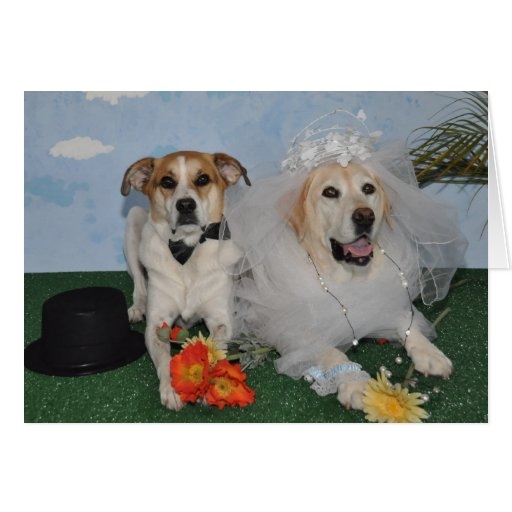 Wedding card, photo of 2 dogs on wedding day