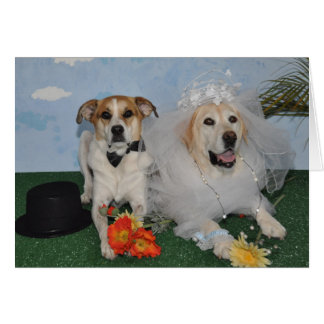 Wedding card, photo of 2 dogs on wedding day card