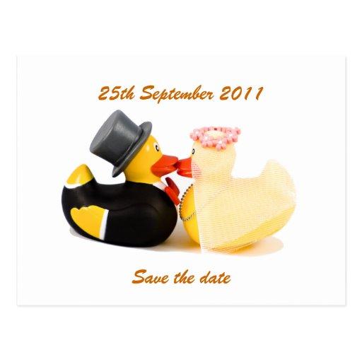 Wedding ducks ... Postcard