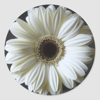 Wedding Gerbera Classic Round Sticker