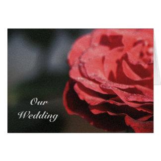 Wedding Invitation, big red dewy rose Greeting Card