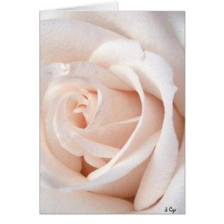 Wedding Rose Greeting Card