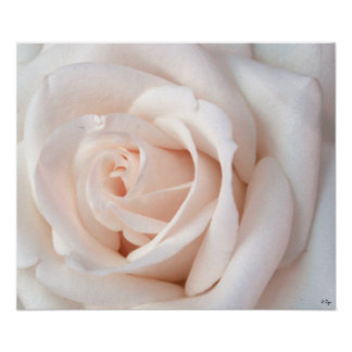 Wedding Rose Poster, S Cyr Poster