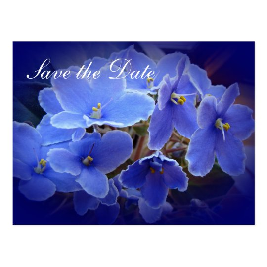 "Wedding ""Save the Date"" Blue African Violets Postcard"