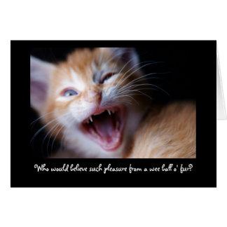 Wee Fierce Kitten Greeting Card