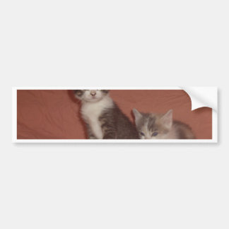 Wee Kitties Bumper Sticker