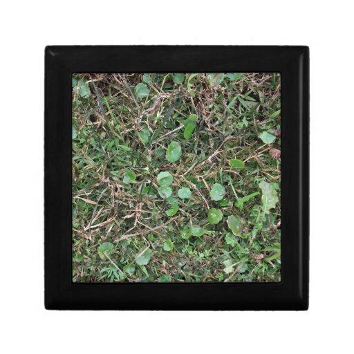 Weeds in Grass Field Trinket Box