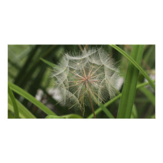 Weeds in my Flower Bed Photo Card
