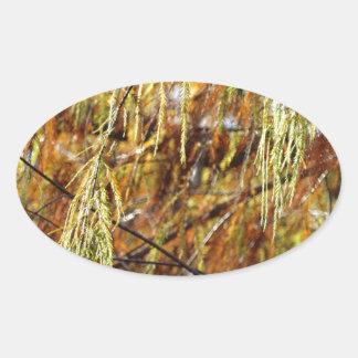 Weeping Autumn Splendor Oval Sticker