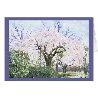 Weeping Cherry in Washington DC Card