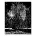 Weeping Willow Canvas Poster
